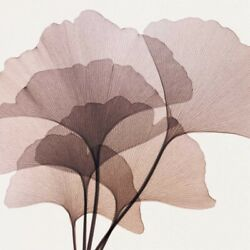 Art-print-gingko-leaves-ii-meyers-45x45in-square-image-on-paper-canvas-leaves-g