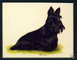 SCOTTISH TERRIERS - Dog Breeds - Collectors Card Set of Six - Crufts Kennel Club