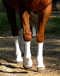 Sox For Horses - Silver Whinnys® - Barriers Against Biting Insects And Uv