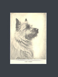 RARE Cairn Terrier Dog Print Art Drawing 1935 by Malcolm Nicholson 10X13 Mat
