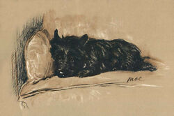 Black Cairn Terrier Dog Napping 1940 by Lucy Dawson  LARGE New Blank Note Cards