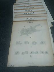 Vintage Turtox Biological Roll Up Charts Insectes Fish