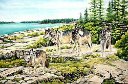 Isle Royale National Park Wolf Watch On Scoville Point By Wandaand039s Watercolors