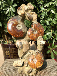 Natural Huge Various Chrysanthemum Stone Combinations/from Madagascar