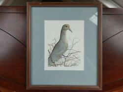 P. Buckley Moss Signed Print And039grey Doveand039 Art 1988 Framed Numbered 53 / 1000 Bird