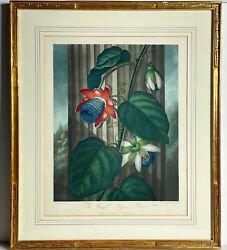 Dr Robert Thornton Temple Of Flora Engraving Original Winged Passion Flower