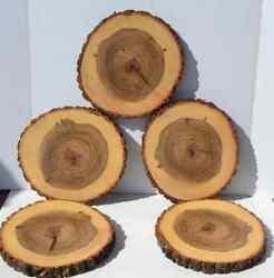 Tree Slices Five 9 To 10 Diameter X 1 Thick With Hand Rubbed Oil Finish