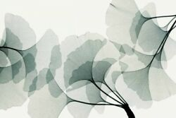 Image-art-print-gingko-dance-meyers-47x31in-print-on-paper-canvas-stretched-fra