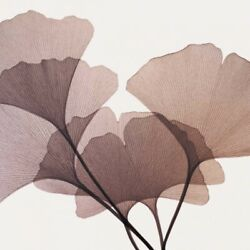 Image-art-print-gingko-leaves-i-meyers-38x38in-print-on-paper-canvas-stretched-