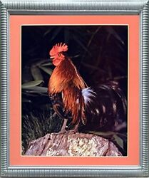 Bantam Rooster Chicken Animal Picture Silver Framed Wall Decor Art Print (20x24)