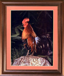 Bantam Rooster Chicken Animal Picture Mahogany Framed Wall Decor Art Print 18x22