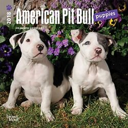 American Pit Bull Terrier Puppies 2018 7 x 7 Inch Monthly Mini Wall Calendar An
