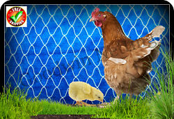 Poultry Netting 50' Duck Pen Chickens Aviary Quail Net Protective Garden Nets