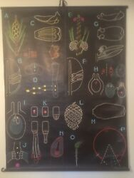 Wall Chart Sougy And Auzoux Pine Cone Seeds