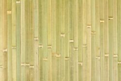 4' X 8ft Bamboo Wainscoting Paneling Raw Green For Tiki Bar Hut Wall And Ceiling
