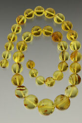 Fossil Insect Genuine Baltic Amber Round Beads 19-11mm Necklace 51.9g 181022-5