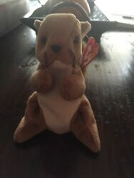 New Mint Condition Nuts The Squirrel Beanie Baby Multiple Errors Pvc Pellets