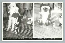 Dog And Cat Dressed In Santa Claus Suits Rppc Satraand039s Purr Palaceelkhorn Wi Photo