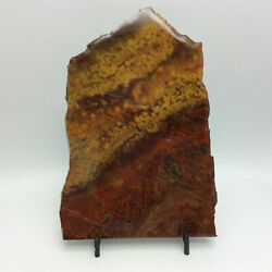 Poppy Jasper Slab 163x11377mm One Side Coated With Resin Lapidary Display