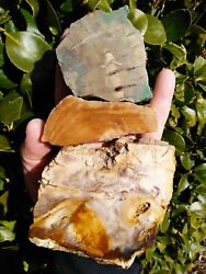 Three 3 Petrified Wood Thick Cut Slab Green Agate Owyhee Mountains Or 1.6lbs