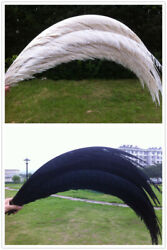 5-100 Pcs 32-36 Inches/80-90 Cm White/black Lady Amherst Pheasant Tail Feathers