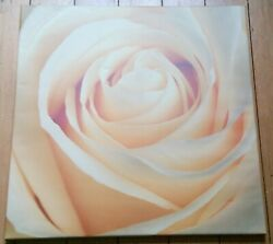 Yellow Rose Box Canvas Floral Print Width 22.75 Inch H 22.75 In D 0.75 In