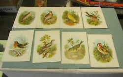 Antique Songbird 8 Color Victorian Trade Card Lot Nightingale Thrush Goldfinch
