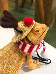 Bearded Dragon Lizards Reptile HatScarf Accessories Toys Christmas Santa Outfit