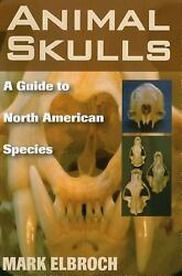 Animal Skulls : A Guide to North American Species Paperback Mark
