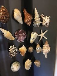 17 Natural Shell Collectible Refrigerator Magnets Lot