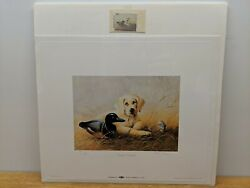 Ducks Unlimited Signed Numbered Framed Print W/stamp Future Promise Lynn Kaatz