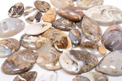 Natural American Fossil Snail Cabochon Fine Loose Gemstone Wholesale Lot Gg-4