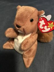 Rare Retired Ty Beanie Baby Nuts The Squirrel 1996 Mint P.v.c. Pellets W Errors