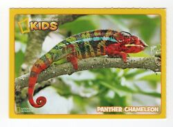 National Geographic Animal amp; Birds Card. Panther Chameleon