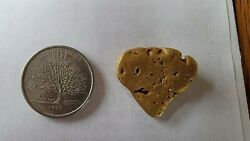 Alaskan Sharks Tooth Gold Nugget For Sale 22.5g