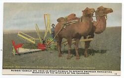 1909 International Harvester Advertising Postcard Camels Pulling Tractor Russia