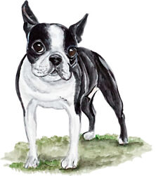 Boston Terrier Dog Almost Alive Vinyl Decal - Auto Car Truck RV Cell Cup Boat