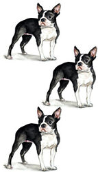 Boston Terrier Small Dog Pet Decal Sticker - Auto Car Truck RV Cell Cup Boat