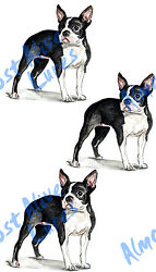 Boston Terrier Dog Triple Sticker Decal RV ATV Glass Window Bumper Mirror SUV