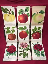 Fruit Floral And Tree Salesman Sample Book M. Brunswick Co. Rochester Ny 1890and039s