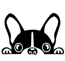 Boston terrier peeking VINYL Decals Sticker 4