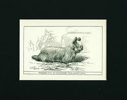 Dog Art Print England 1900 Skye Terrier Dog ANTIQUE