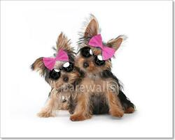 Yorkshire Terrier Puppies Dressed Up Art Print Home Decor Wall Art Poster - D