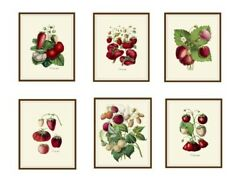Set of 6 Vintage Botanical Art Print Poster Reproductions Strawberries 8quot;x10quot;