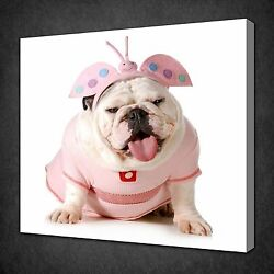English Bulldog In Pink Dress Animal Canvas Wall Art Picture Print Ready To Hang