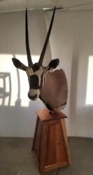 Taxidermy Gemsbok Oryx Shoulder Mount On Wooden Stand Very Large Height 87''