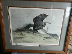 American Bald Eagle Over Sand Dune By Charles Frace Signed Framed And Matted Print