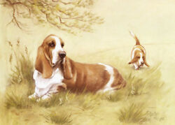 Basset Hound Limited Edition Art Print by UK Artist Gail Tointon*