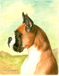 Boxer Art Print by USA Artist Barbara Walker*