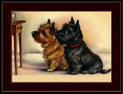 93995 English Picture Scottish Cairn Terrier Dog Decor Laminated Poster Fr